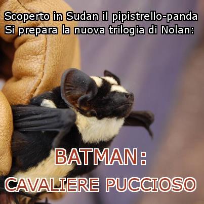 Batman cavaliere puccioso