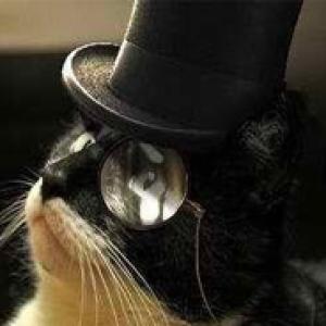gatto pinguino